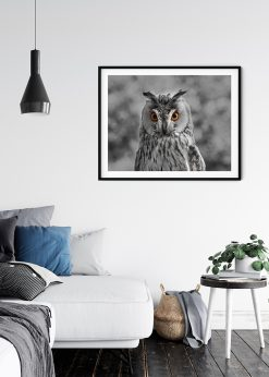 The Grey Owl