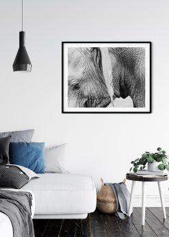 Closeup Elephant