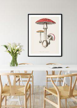 Fly Agaric Mushroom Vintage