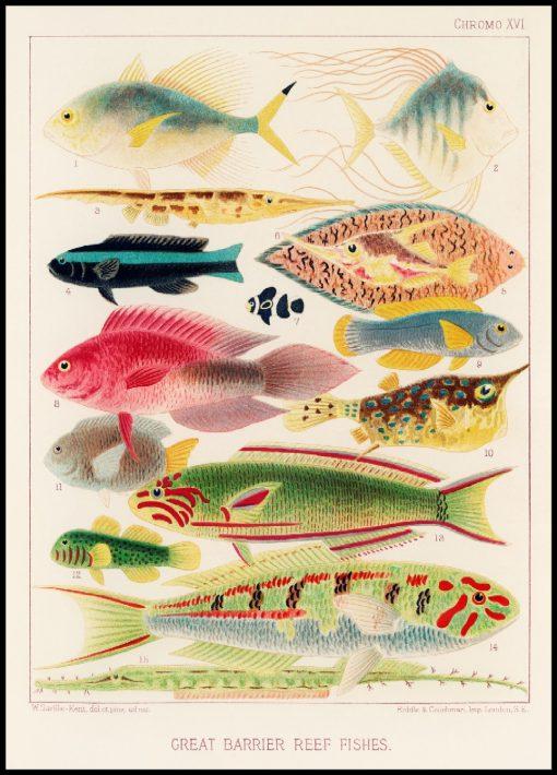 Great Barrier Reef Vintage