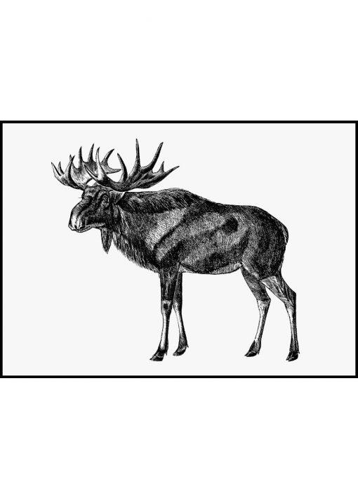 Scandinavian Elk Sketch Vintage