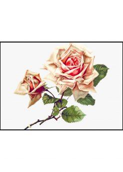 The Rose Vintage