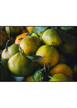 Fresh Greenish Orange