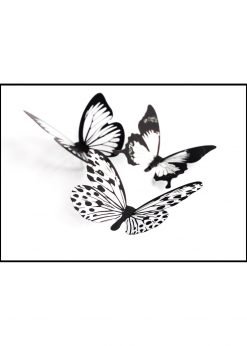 Butterflys In Black And White