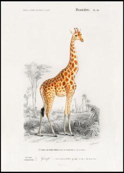 Giraffe Vintage