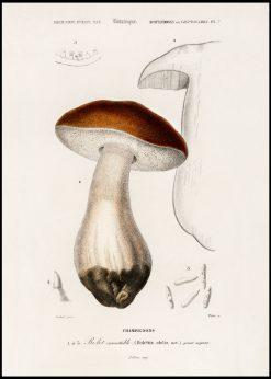 Porcini Mushroom Vintage