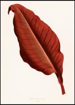 Beautiful Leaf Vintage