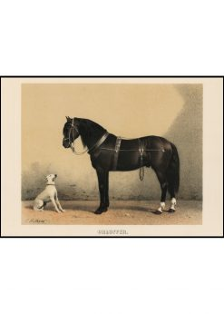 Horse and Dog Vintage
