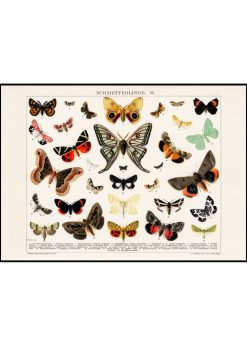 Collage of Beautifull Butterflies and Moths