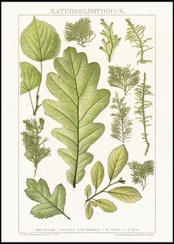Painting of Various Leaves