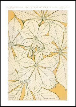 Leaves from Nature Illustration