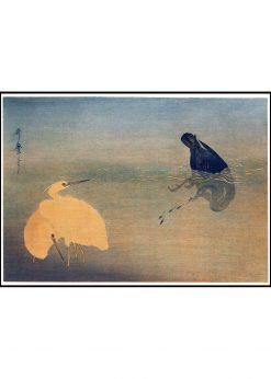Shirasagi Illustration