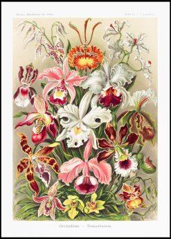 Orchideae-Denusblumen Vintage