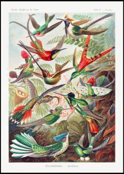 Birds of Paradise Vintage
