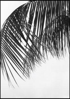 Palm Leaf in Gray