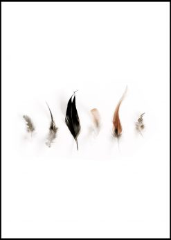 Collection of Feathers nr.1