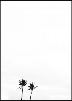 White Sky and Two Palm Trees