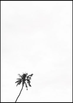 White Sky and One Palm Tree