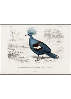 "Pigeon ""Le Pigeon"""