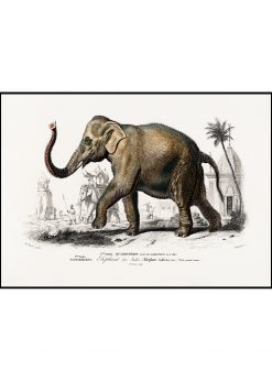 "Indian Elephant ""Elephant des Indes"""
