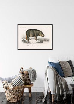 "Hippopotamus ""Hippoptame"""