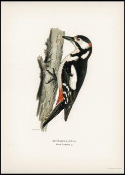 Vintage Woodpecker