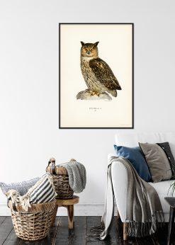 Vintage Eagle Owl