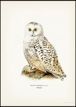 Vintage Snowy Owl