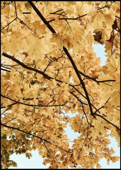Maple Leafs in the Autumn