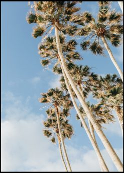Palm Trees from Worm's Eye View
