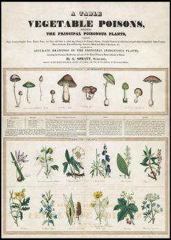 Vegetable Poisons