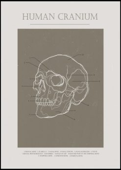 Human Cranium by Gabriella Roberg