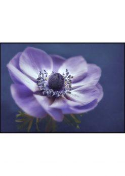 Brittle Purple Flower